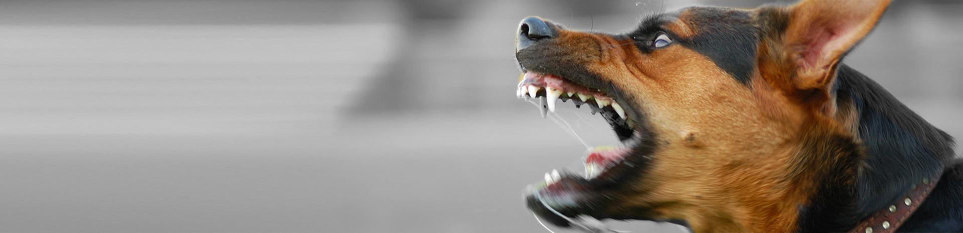 Letselschade hondenbeet | Gebeten door hond