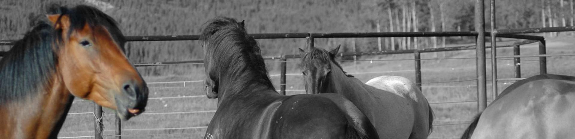 Ongeluk met paard, trap en val van paard
