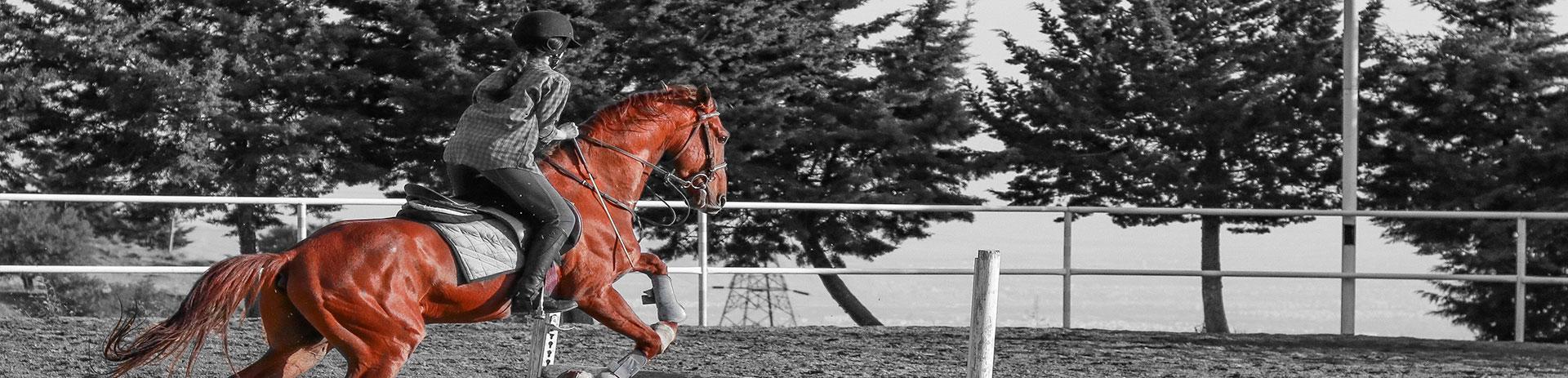 letselschade verhalen na ongeval met paard